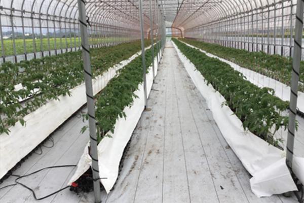 低段蜜植栽培システム提案